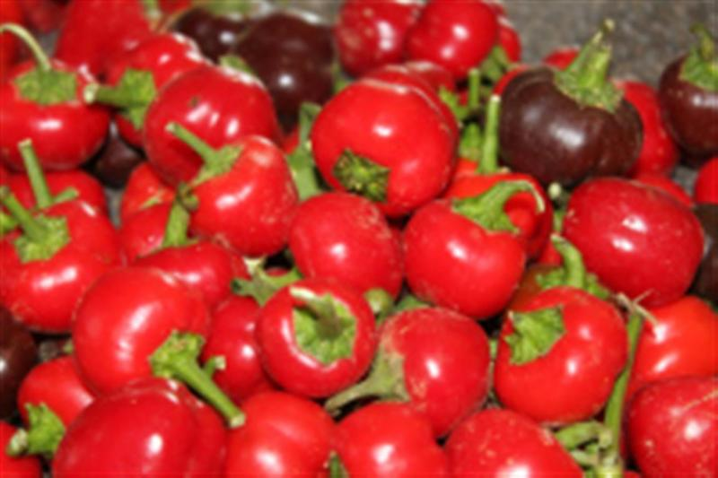Mini red belle sweet pepper 20 seeds